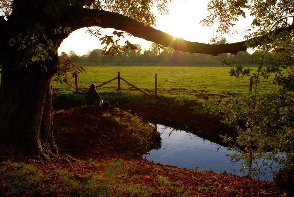 slunce a strom